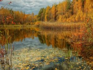 Otoño junto al lago del bosque