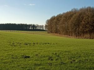 Árboles en un prado verde