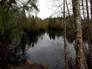 Árboles rodeando un lago