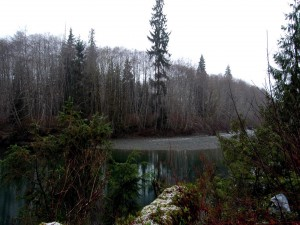 Árboles invernales junto a un río