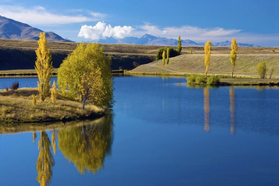 Árboles amarillos junto al lago