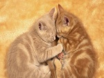 Gatitos durmiendo juntos