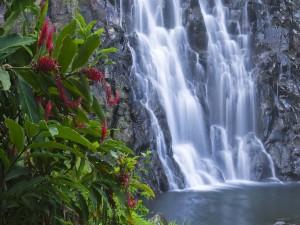 Bonita planta junto a una cascada