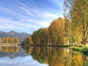 Hilera de árboles junto al lago