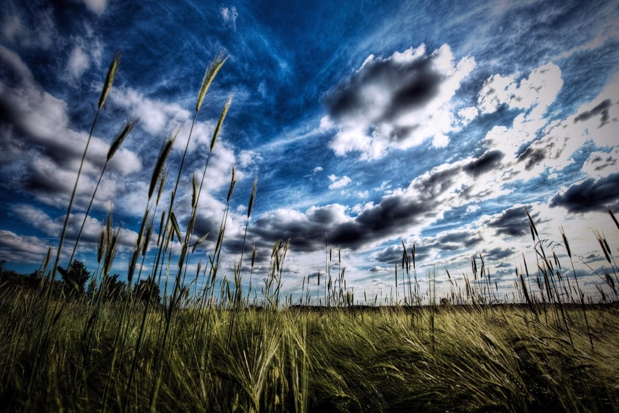 Bonito cielo sobre el trigal