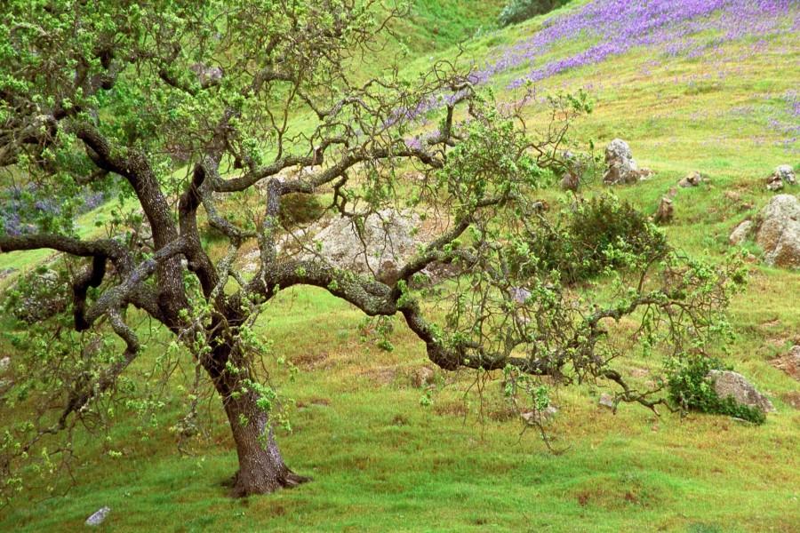 Un bonito árbol en el campo