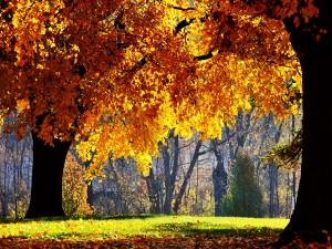Sol iluminando los árboles en otoño