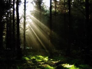 Rayos filtrándose en el bosque