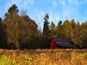 Un granero junto a los árboles