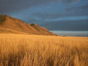 Animales en un campo de trigo