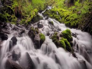 Río fluyendo sobre piedras musgosas