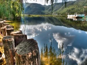 Troncos junto al lago