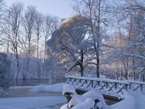 Hermosa tarde invernal