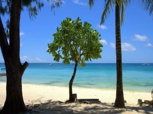 Pequeño árbol en la playa