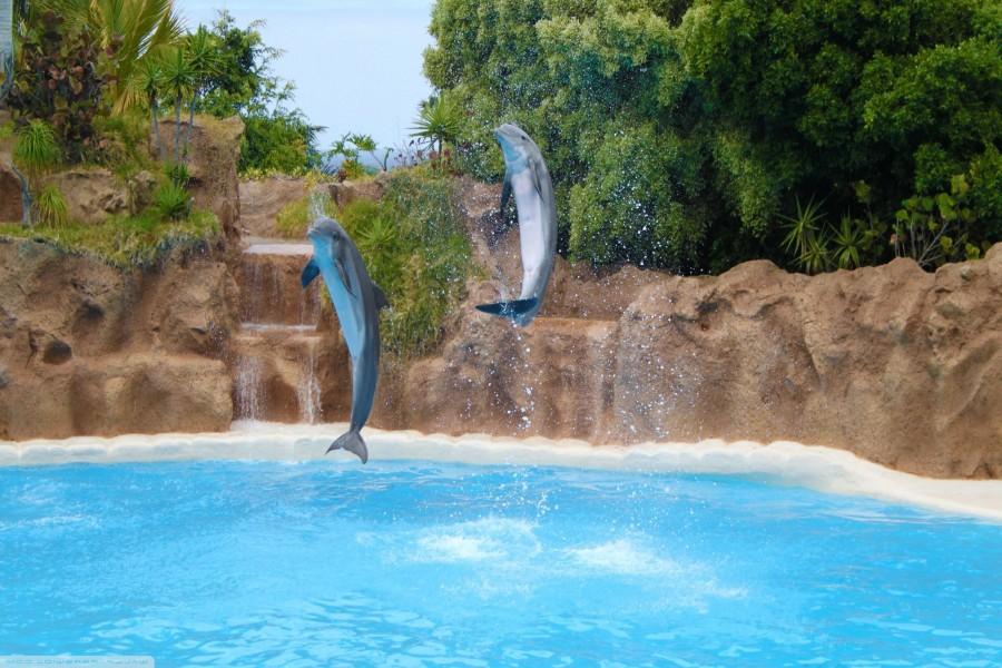 Delfines saltando en una piscina