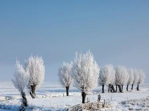 Árboles nevados bajo un cielo celeste