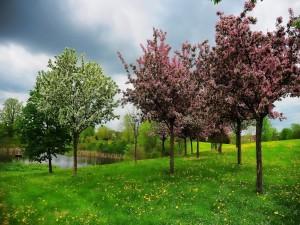 Floreciente primavera