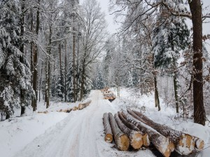 Troncos en un bosque nevado
