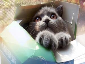Gato metido en una caja
