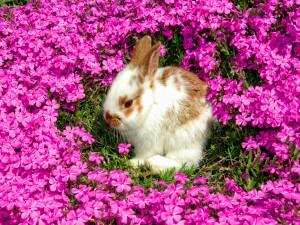 Conejo entre flores rosas