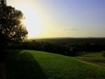 Sol tras un árbol al amanecer