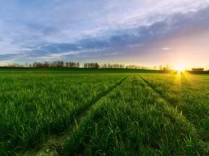 Serenidad en el campo verde
