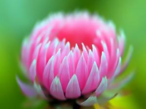 Hermosa flor con pétalos rosas