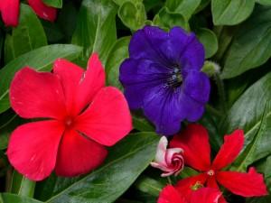 Flores en la planta