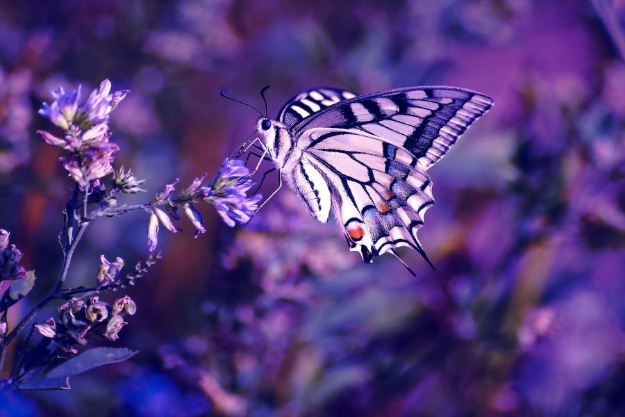 Hermosa mariposa posada en unas florecillas