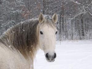Nieve cayendo sobre un caballo