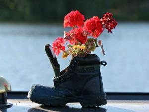 Geranio en una bota vieja