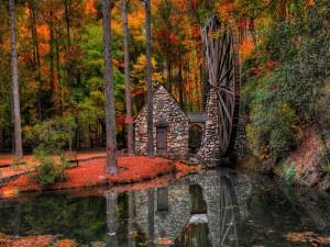 Molino de agua en el bosque