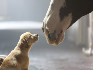 Caballo frente a un perro