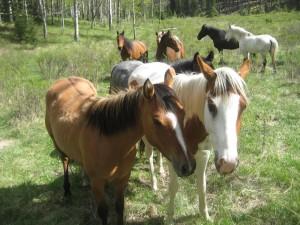 Manada de caballos en el campo