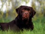 Perro marrón sobre la hierba
