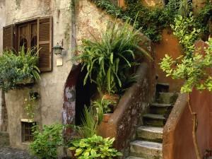 Plantas en la entrada de una casa
