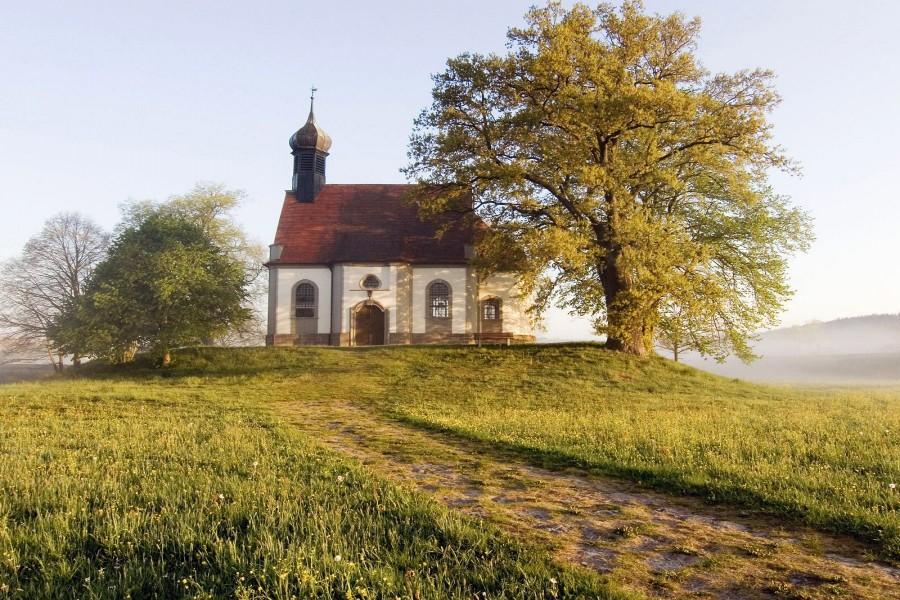 Árboles junto a una iglesia