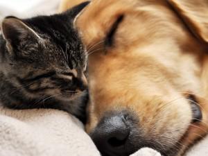 Gatito durmiendo junto al perro