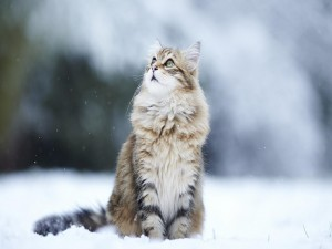 Hermoso gato sobre la nieve