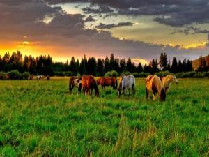 Caballos en una hermosa pradera verde