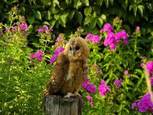 Lechuza descansando entre unas flores