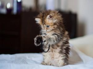 Gatito jugando con una goma