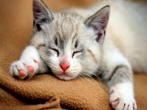 Un gatito dormido