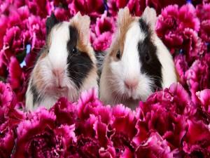 Conejillos de Indias entre flores