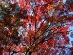 Árboles con hojas rojas en otoño