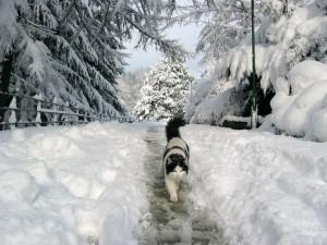 Gato caminando sobre la nieve