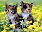 Dos gatitos entre las flores amarillas