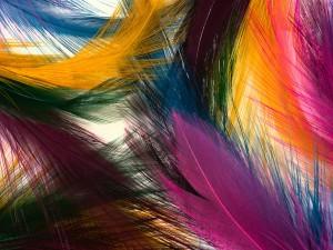 Coloridas plumas