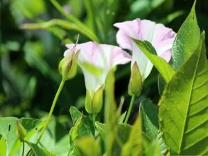 Flores silvestres en la planta verde