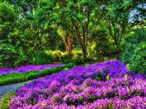 Jardín con flores de color púrpura